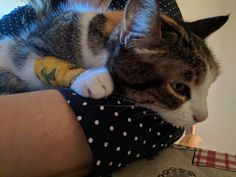 Enfermedad renal #gatafura #cats_instagram #cats #gatos