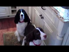 (re pinned) My Dogs Do The Craziest Thing When They're Hungry. Just Watch!