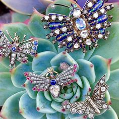 Love the detail in these pieces  #Repost @diamondsinthelibrary with @repostapp  I love everything about this picture of antique @craigevansmall butterfly brooches swarming on a succulent.  Photo via @craigevansmall. . . . . . #jewelrygram  #antiquejewelry  #butterflybrooch  #bringbackthebrooch  #diamondsinthelibrary