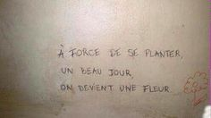 french humour // i want to be a tree !
