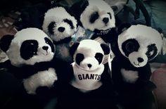 Panda Bear, Halloween, Animals, Collection, Decor, Animais, Decorating, Animales, Animaux