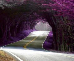 Livemocha: Image from Portugal. I want to drive down this road. Gorgeous purple.