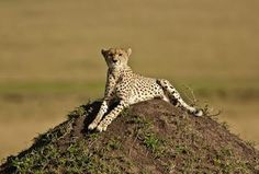 Masai Mara Road Safari Holiday - Rate: From US$380.00 per person sharing for 2 Nights