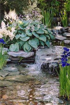 Hostas and water