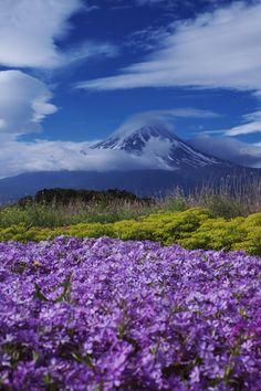 富嶽よ永遠に~大石公園2