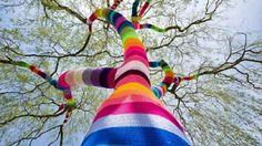 Color sock tree