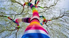 Color sock tree