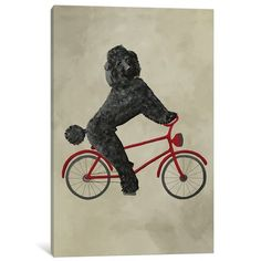 """East Urban Home 'Poodle on Bicycle' Painting Print on Canvas Size: 18"""" H x 12"""" W x 0.75"""" D"""