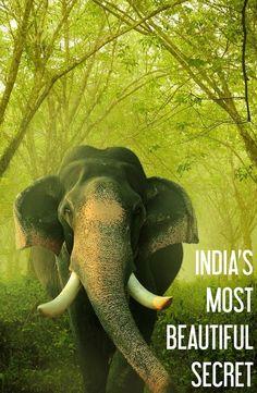 Havelock Island, Andaman Islands: India's Most Beautiful Secret