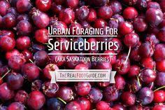 Urban foraging for serviceberries (aka saskatoon berries) Dairy Free Recipes, Real Food Recipes, Gluten Free, Serviceberry Recipe, No Sugar Desserts, Berry Crumble, Organic Fruits And Vegetables, Sans Gluten, Paleo Diet