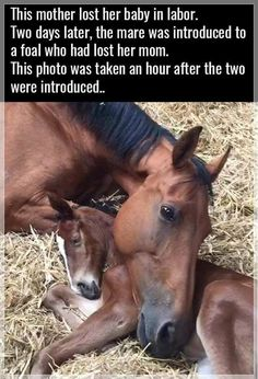 Mare who lost her foal / Foal who lost her mother united❤️️ Horses feel loss as humans do.