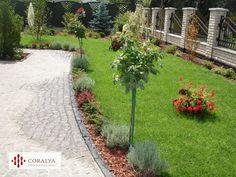 O promenada..paradisul tau...bijuteria ta urbana... Private Garden, Sidewalk, Gardens, Plants, Bijoux, Side Walkway, Outdoor Gardens, Walkway, Plant