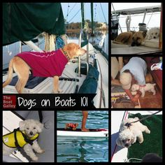 Dogs on Boats Thinking of taking your dog on your boat? Or considering getting one and wondering about the realities? Tips to make it a great experience for you and your best friend! Sailboat Living, Living On A Boat, Cool Boats, Small Boats, Dogs On Boats, Boating Tips, Boat Insurance, Sailing Trips, Boat Projects