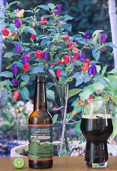 Ancho Dark Lager (Tempest Brewing - Angleterre) -  Piments Ancho (Les Jardins du Quercy) -  Calendrier de l'avent Saveur-Biere.com #BeeryChristmas