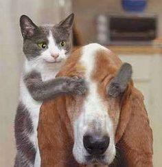 Gato e cachorro brincando de adivinha quem é