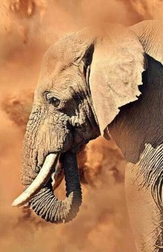 Such tender eyes❣️ Mammifères Elephant Love, Elephant Art, African Elephant, African Animals, Elephants Photos, Save The Elephants, Baby Elephants, Baby Cows, Animals And Pets