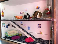 Diy Bunny Cage, Bunny Cages, Hamster Live, Pig Ideas, Pet Cage, Diy Bed, Animal House, Diy Stuffed Animals, Guinea Pigs