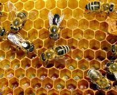 Propolis is not new, and it is certainly not a trend. Anyone curious about it will find a busy world full of researchers and advocates. Natural Health Remedies, Natural Cures, Home Remedies, Natural Healing, Beekeeping For Beginners, Honey Packaging, Propolis, Bee Boxes, Receding Gums