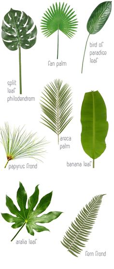 8 Leaves To Love + Tropical Leaf Decor Ideas #TropicalDecor