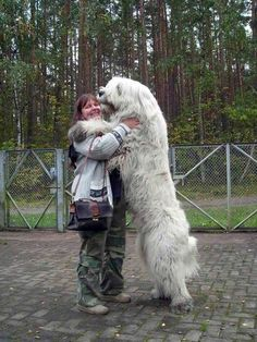 This dog who wants a hug. | 21 Dogs Who Don't Realize How Big TheyAre
