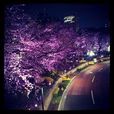 sakura(桜) at Tokyo Midtown Tokyo Midtown, Sakura Sakura, Cherry Blossom, Photograph, Sketch, Country Roads, Places, Beautiful, Photography