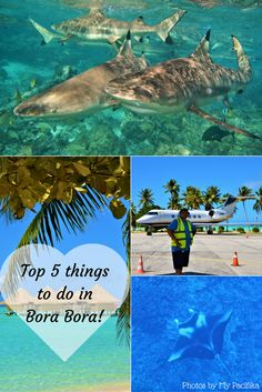 Top 5 things to do in Bora Bora!