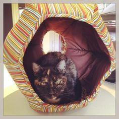 This Cat Ball® cat bed image was posted on Instagram by @hauspanther The www.Hauspanther.com blog is a wonderful resource for cat furniture and supplies.