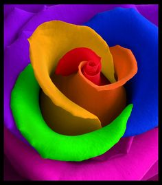 Rainbow Rose…split stem in 5 sections, place each split end into separate container of water dyed with food coloring.I shall see if this works! Taste The Rainbow, Over The Rainbow, Rainbow Roses, Rainbow Colors, Rainbow Candy, Beautiful Roses, Beautiful Flowers, All The Colors, Vibrant Colors