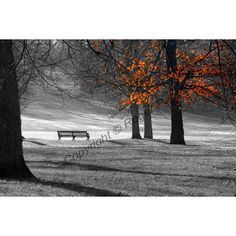 Digital Download, Greenwich Park photography by Roger Pan (€8,74) ❤ liked on Polyvore featuring home and home decor