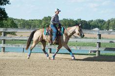 Synergy™ Contoured Barrel EVA Sport Foam Saddle Pad – Orthopedic Felt Liner Western Saddle Pads, Contour, Westerns, Barrel, Felt, Horses, Sport, Detail, Animals