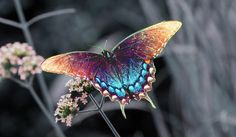 Обои на рабочий стол: бабочка, насекомое, цветок