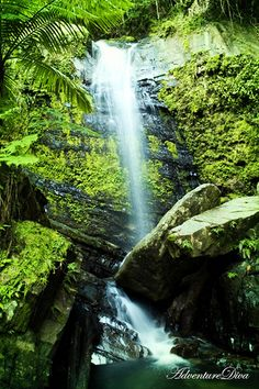 El Yunque rainforest in Rio Grande, Puerto Rico.  Just got back from here and it was breathtaking!