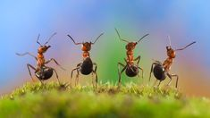 Ants dancing.  by Kozorog on @creativemarket