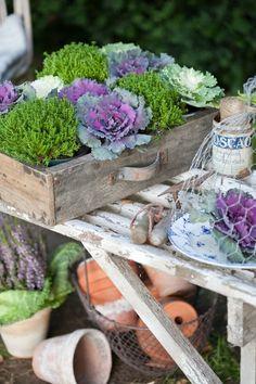 nice arrangement of ornamental cabbage plants Ornamental Cabbage, Deco Champetre, Deco Nature, Modern Garden Design, Cabbage Roses, Deco Floral, My Secret Garden, Terra Cotta, Dream Garden