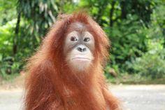 Borneo wildlife, coral reef and orangutan adventure with Frontier – trek in Borneo on your gap year