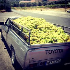 Grape delivery to Peza Union, Crete