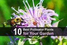 Yard Care, Beneficial Insects, Backyard, Gardening, Plants, Animals, Patio, Animales, Animaux