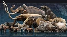 """""""Megafauna"""" were the other giants that roamed the earth after the dinosaurs. They teach us a lot about rewilding, to recover balance in the natural world. Prehistoric World, Prehistoric Creatures, Vida Animal, Extinct Animals, Fauna, Jurassic Park, Wildlife Art, T Rex, Natural History"""