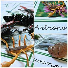 Free animals cards Montessori  Vertebrados e invertebrados