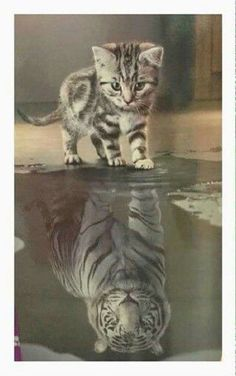 Reflection-----Little Kitten, Outside: Big Tiger, Inside.