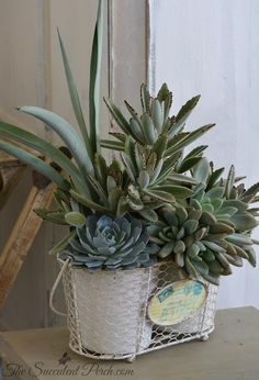 Gray and white shabby chic arrangement from the Succulent Perch