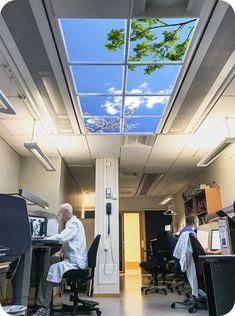 Wyposażenie gabinetów lekarskich, pomieszczeń medycznych. Wirtualne okno dostarczające naturę pomieszczeniom bez okien. Wyposażenie gabinetów medycznych, wyposażenie, dekoracja sufitu, sufit kasetonowy