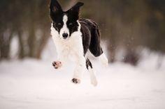 Border Collie Puppy's First Snow Trip!