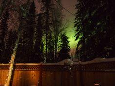 3-3-13 My backyard in North Pole. Amy Stratman