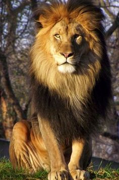 God is the Lion of the Tribe of Judah.  So majestic and so loving, too!: