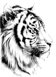 تصویر زمینه ببر | Tiger Wallpaper | All in Bit Wallpaper