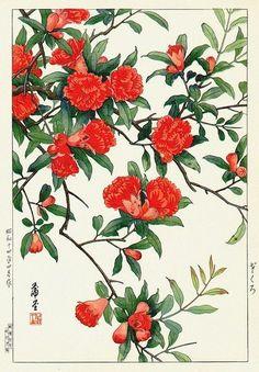Pomegranate Hodō Nishimura 1939