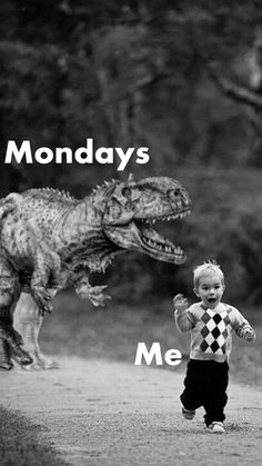New Iphone Wallpaper Funny Haha Life Ideas Monday Morning Quotes, Monday Quotes, Funny Relatable Memes, Funny Jokes, Hilarious, Work Memes, Work Humor, Jolie Phrase, Monday Humor