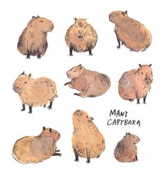 Get rid of stubborn belly fat now! belly fat Photo August 05 2019 at hold onto hope if you've got it Cute Animal Drawings, Art Drawings, Cute Wild Animals, Capybara, Pokemon Fan Art, Nature Illustration, Walking In Nature, Art Techniques, Cute Art