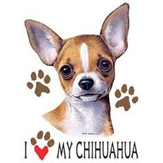 NEW I Love My Chihuahua Unisex T SHIRT IMAGE IS ON THE FRONT OF THE SHIRT SHIRT COLOR IS WHITE T-Shirt Information: *Unisex Sizes Available M, L, XL, 2XL *Material: 100% Cotton *Pre-Shrunk Full Cut Sh